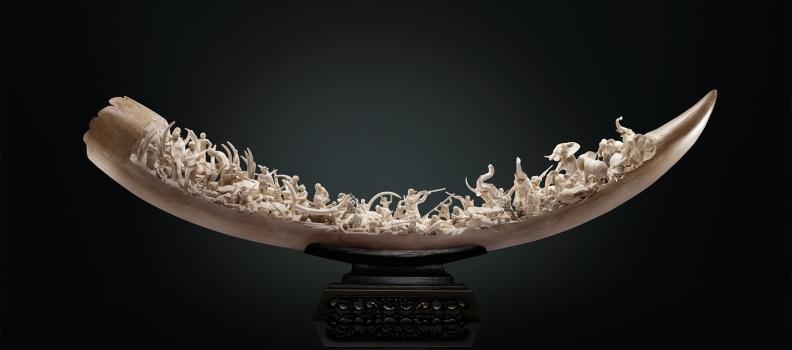 035 WWF_ivory