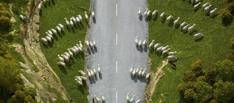 050 Borsh_NZ_after