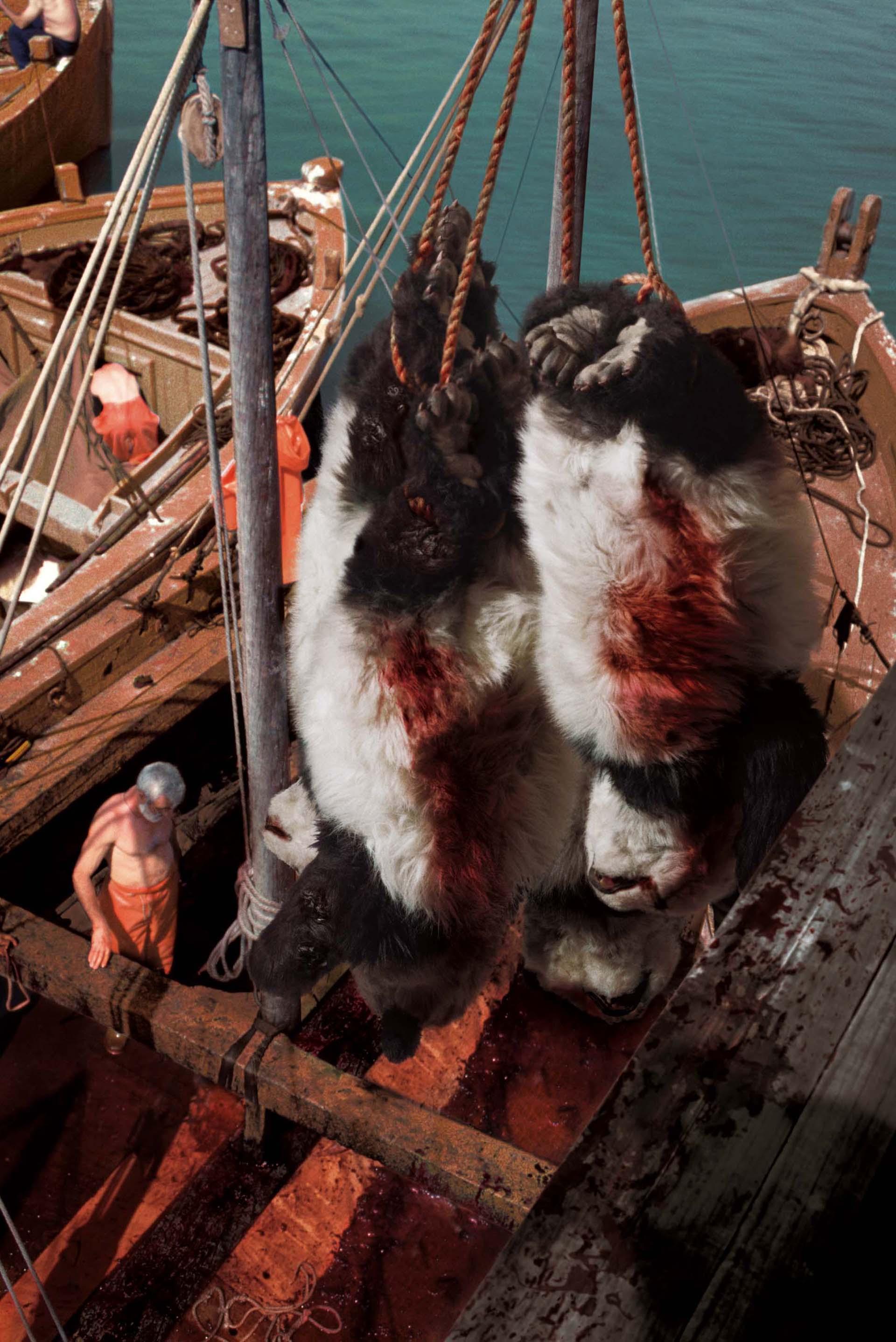 046 Sea Shepherd2